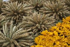 麦子耳朵和黄色秋天花 免版税库存图片