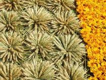 麦子耳朵和黄色花纹花样 库存图片