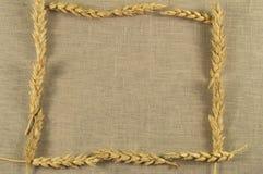 麦子耳朵框架在亚麻布餐巾的 免版税库存图片