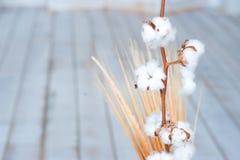 麦子耳朵纹理有棉花分支的在一个花瓶的反对树 库存图片