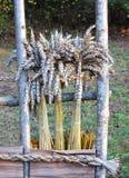 麦子耳朵花束,立陶宛 库存图片