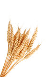 麦子耳朵茎  免版税库存图片