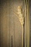麦子耳朵 库存图片