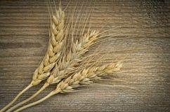 麦子耳朵 免版税库存照片