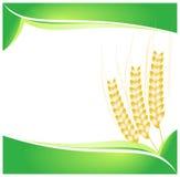 麦子背景 库存图片