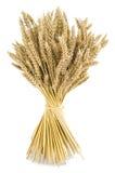 麦子花束 免版税图库摄影