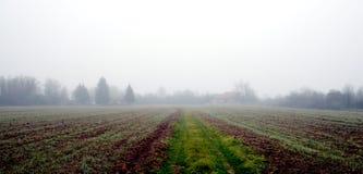 麦子被归档在雾下 免版税库存照片