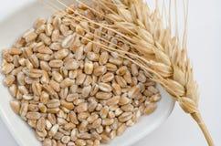麦子谷物和耳朵 免版税库存图片