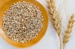 麦子谷物和耳朵 免版税库存照片