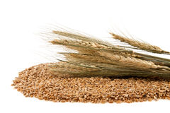 麦子谷物 库存图片