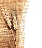 麦子边界 免版税库存图片