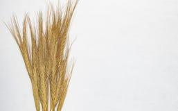 麦子钉在水平的白色背景中 免版税库存照片