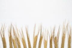 麦子钉在水平的背景中 库存照片