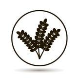 麦子,谷物的耳朵 库存例证