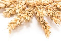 麦子,细节的耳朵花圈  免版税库存图片