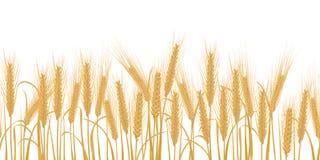 麦子水平的边界无缝的样式的耳朵 向量例证