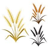 麦子黑麦或大麦的耳朵装饰元素集 免版税图库摄影
