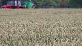 麦子黑麦耳朵和被弄脏的拖拉机喷洒的领域特写镜头与化学制品 影视素材