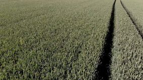 麦子 股票录像