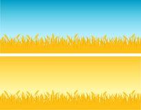 麦子 免版税库存照片