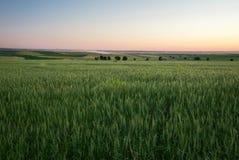 3麦子 免版税库存图片