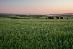 4麦子 免版税图库摄影