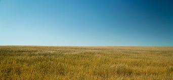 麦子9 免版税库存图片