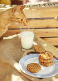 麦甜饼和猫嗅到的牛奶 免版税图库摄影