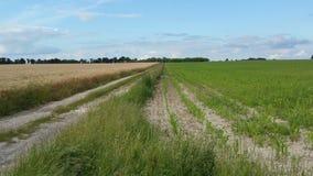 麦田之间的一条道路 免版税库存图片