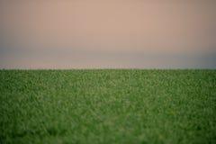 麦田和天空,一个农村风景 免版税图库摄影