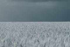 麦田和天空,一个农村风景 图库摄影