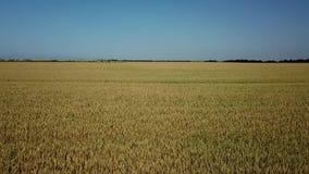 麦田和好日子,美好的自然风景 r 影视素材