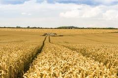 麦田和干草谷仓 库存图片