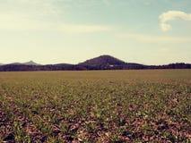 麦田和被环绕的小山 足迹在春天领域 免版税库存图片