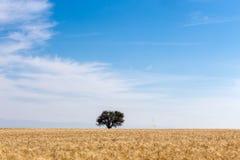 麦田和结构树 免版税图库摄影