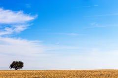 麦田和结构树 库存图片