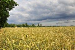 麦田在勃兰登堡(德国)由多暴风雨的天气 库存照片