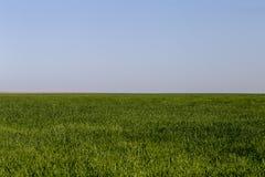 麦田在得克萨斯在一个大风天 库存图片