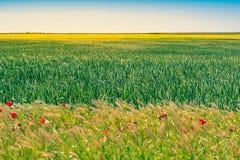 麦田在西班牙,有温暖的光和黄昏的在春天卡斯蒂利亚y利昂期间 免版税库存照片
