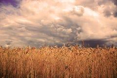 麦田在风暴前面的 免版税库存图片