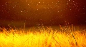 麦田成熟的大麦特写镜头在日落多云黄色/orange /gold天空ultrawide背景的 飞行,淡光 库存图片