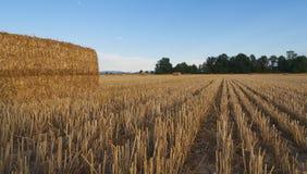 麦田收获了与干草捆在日落-塞扎迪奥-皮耶蒙特 免版税库存图片