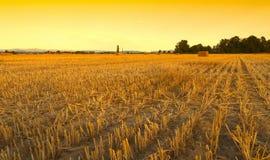麦田收获了与干草捆在日落-塞扎迪奥-皮耶蒙特 库存图片