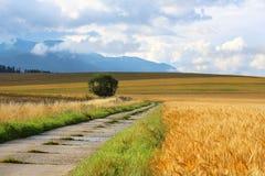 麦田看法在高Tatras,斯洛伐克下的 库存图片