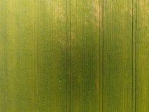 麦田纹理  年轻绿色麦子背景在领域的 从quadrocopter的照片 麦田的空中照片 免版税库存照片