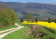 麦田风景和油菜籽与离开在距离的路 库存图片