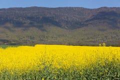 麦田风景和油菜籽在登上朱拉背景中在法国 免版税图库摄影