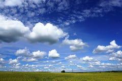 麦田,白色云彩,蓝天 免版税库存照片