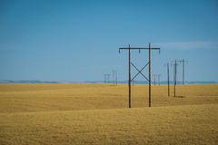 麦田,输电线,东华盛顿 库存图片