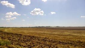 麦田 在领域的夏天 农业在库班河州农业大学 库存图片